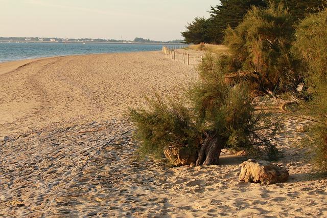 Préparer vos séjours en Vendée, tout ce qu'il y a à savoir avant le voyage